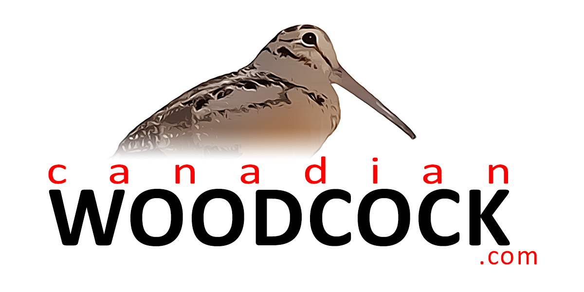 canadian woodcock